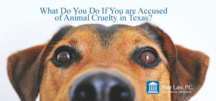 What Do You Do If You are Accused of Animal Cruelty in Texas?